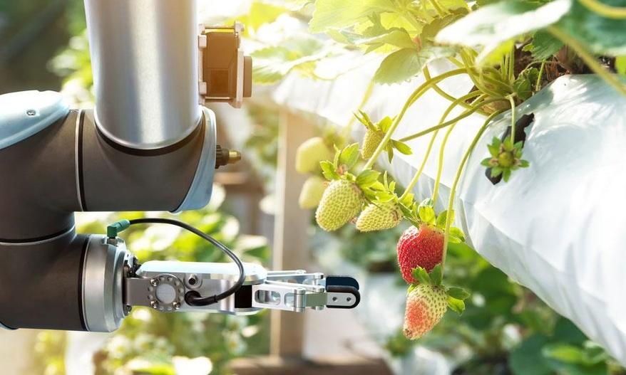 事例2:細かな農作業に対するロボット活用